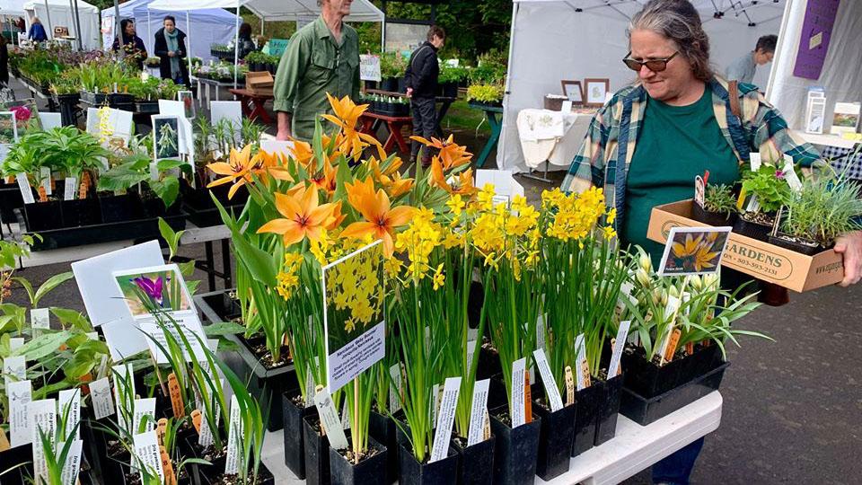 37_annual_spring_annual_plant_sale
