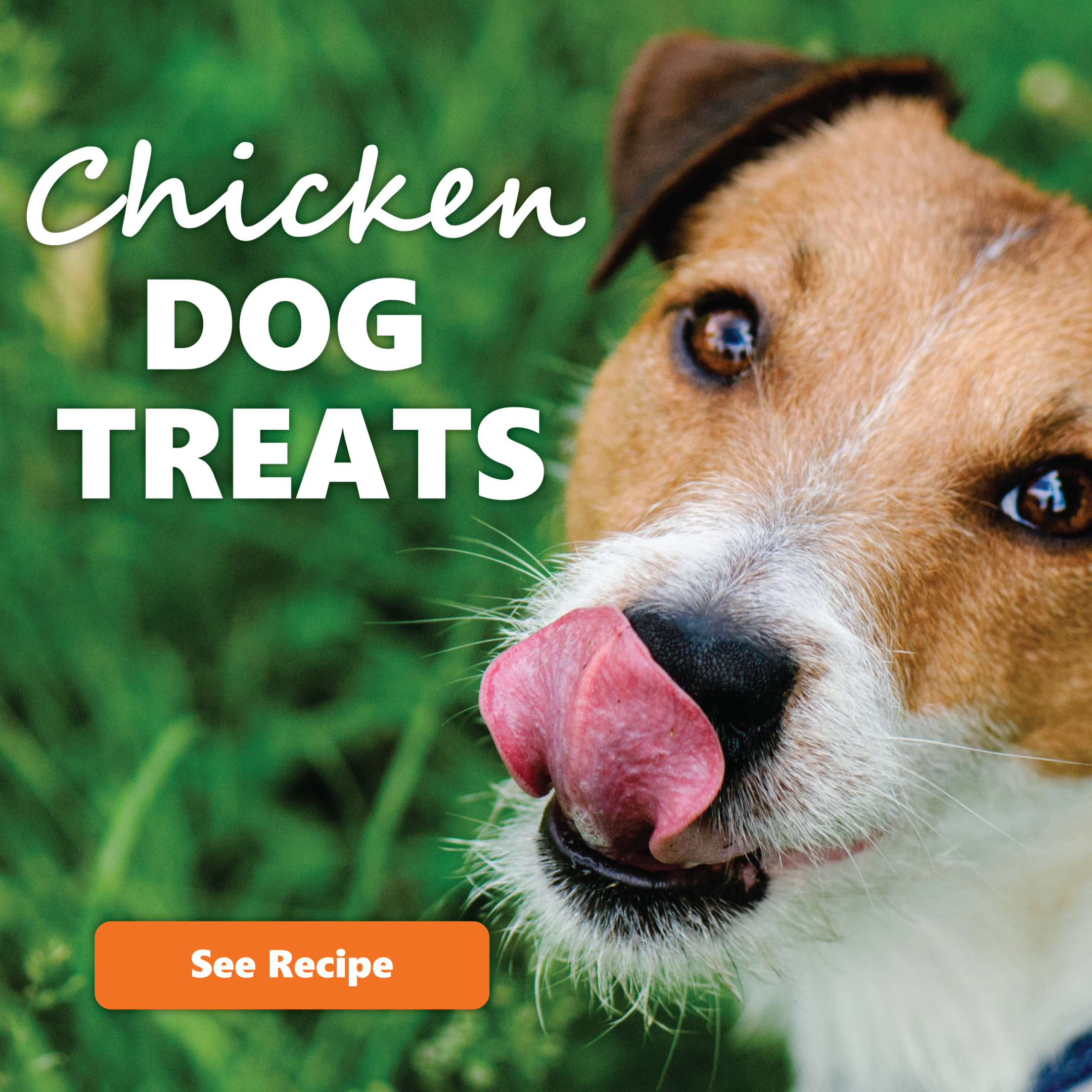 chicken dog treats recipe